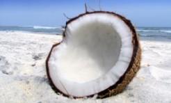 明日からスグ使える!ココナッツオイルの魅力と活用法