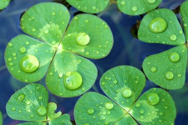最近、泣いてますか?「週イチ涙」で記憶力&免疫力もアップ!?