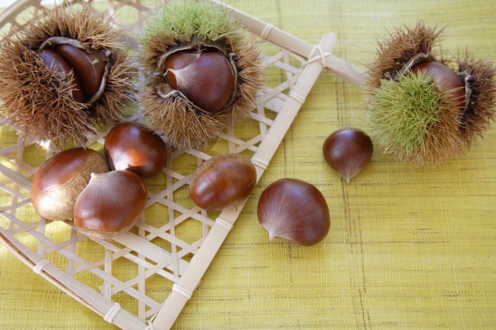 40492521 - chestnut