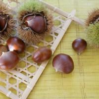 秋の美肌&温活おやつは甘栗に決まり!薬膳的・栗の効能5つ