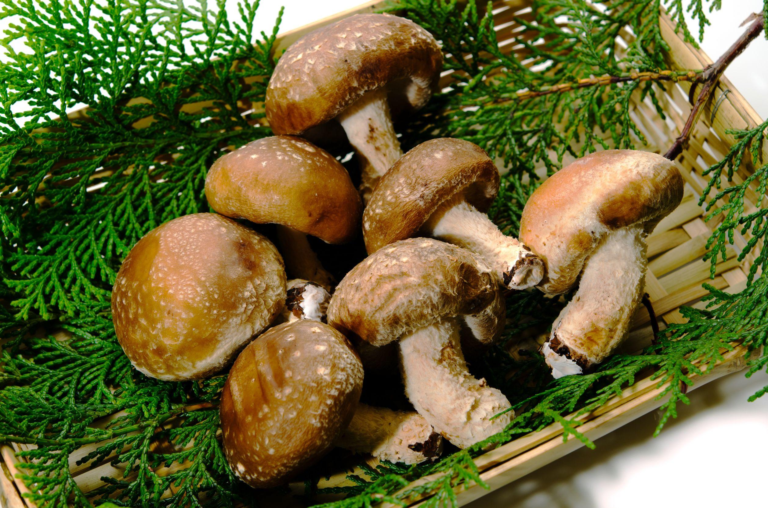 13279926 - shiitake mushroom