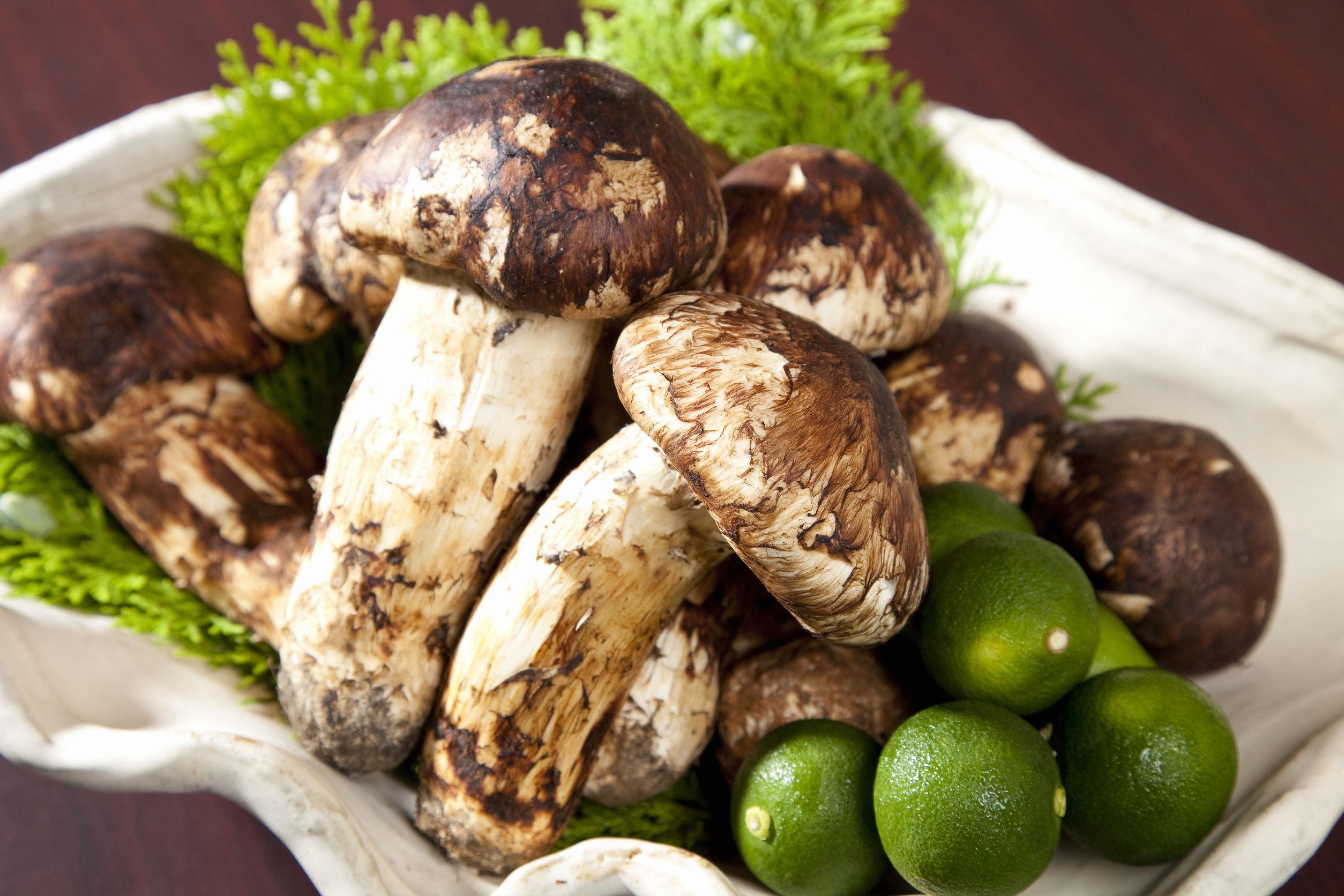 43506267 - matsutake mushroom