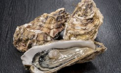 51998413 - oyster