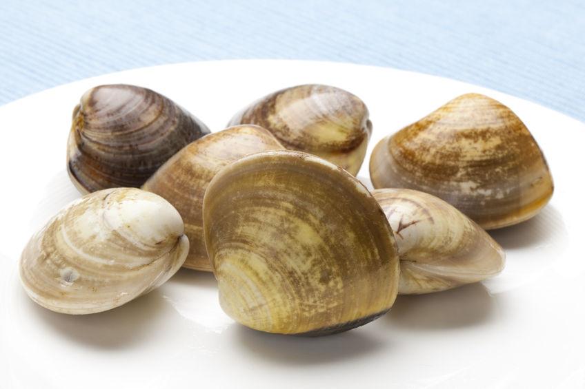 49494369 - clam