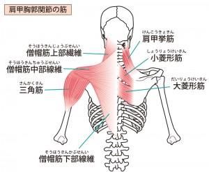 筋肉を意識しながらストレッチすれば効果も倍増!?