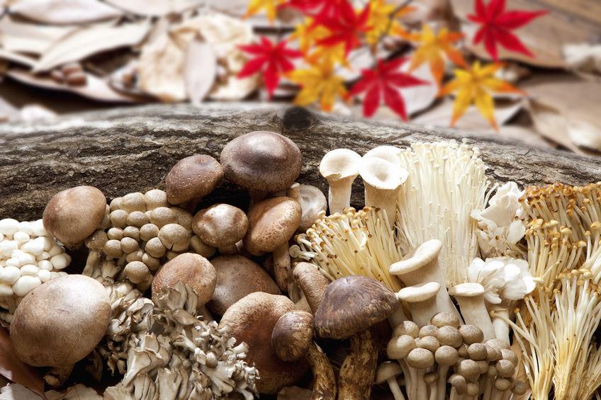 キレイのために摂りたい秋の味覚3選 きのこ