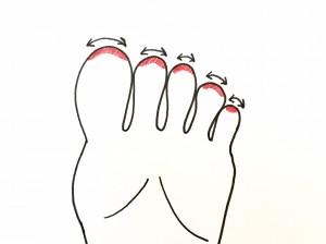 前頭洞、服鼻腔の反射区はイラストのように、足指の先