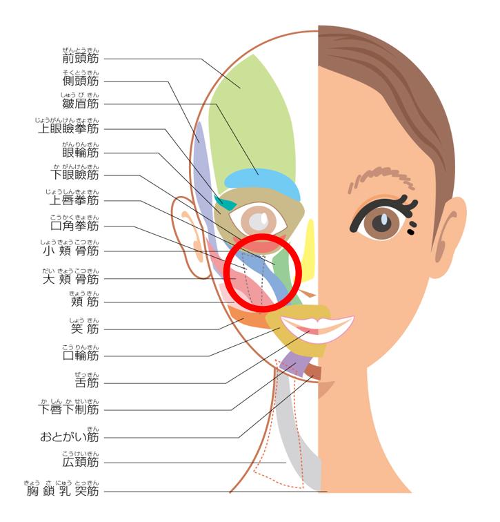 ゴルゴ線の原因と対処法 表情筋の衰えによる頬のたるみ