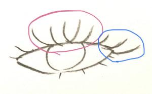 黒目の上下だけを強調した場合のまつげの印象