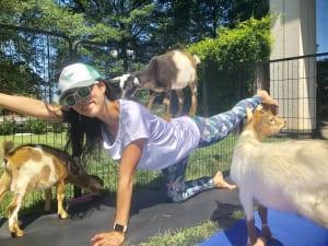 そんな高い場所を好むヤギがいるなかで「テーブルトップポジション(四つん這い)」や「チャイルドポーズ(子供のポーズ)」になると、背中にぴょんと子ヤギが乗ってきたり、髪の毛をむしゃむしゃ食べようとしてきたりします