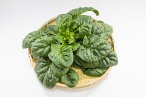 朝食で寒さに負けない強い身体をつくる!冬の朝ごはん野菜 (2)ほうれん草