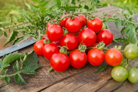 栄養がギュッ!ミニトマトのリコピンが効率良く取れる食べ方