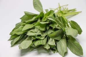 夏野菜でヤセ菌育成!?腸内環境美化に役立つ夏野菜3つ