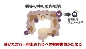 そのなかでも、便秘をすることで便が悪玉菌のエサとなり有害物質である「フェノール類」が産生され、その有害物質が腸の壁から血流に乗って全身に運ばれて肌にも届いてしまうことが、肌荒れの主な原因だといわれています