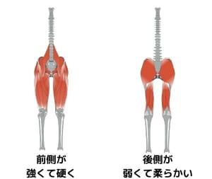 女性の身体は、「前ももの筋肉が強く硬い」「お尻や裏ももの筋肉が弱く柔らかい」という特徴があります。そのため、骨盤が前傾されやすいです
