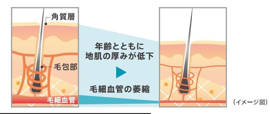 エイジング髪画像(毛細血管萎縮)