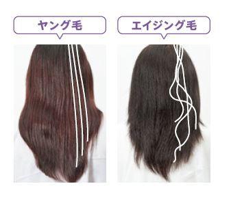 エイジング髪画像(ヤング&エイジング毛)