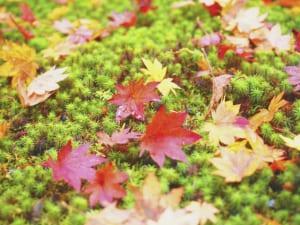 過ごしやすいはずの秋に「秋疲れ」