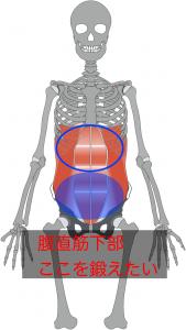 腹筋はこれだけ長いのですから、エクササイズによってアプローチする部分が変わってしまいます。冒頭のNG腹筋は腹直筋の上部を動かすエクササイズですので、下腹を引き締める効果はあまり狙えません