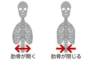 腹部の筋肉などが正常に機能していると肋骨をお腹の真ん中の方に収めておくことができるのですが、筋力などが弱くなってしまった場合、肋骨を中央に収めておくことができずに胸郭全体が外側に広がってしまうことがあります