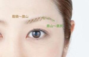 眉頭から眉山は、毛が下から上に向かって生えていることが多いです。眉を描く時も写真の茶色い矢印の方向を意識して毛と毛の隙間を埋めるように1本1本描きたします