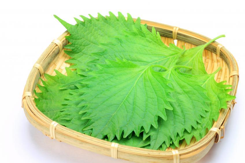 大葉で夏老け対策!かしこい食べ方&美味しさ長持ちの保存法