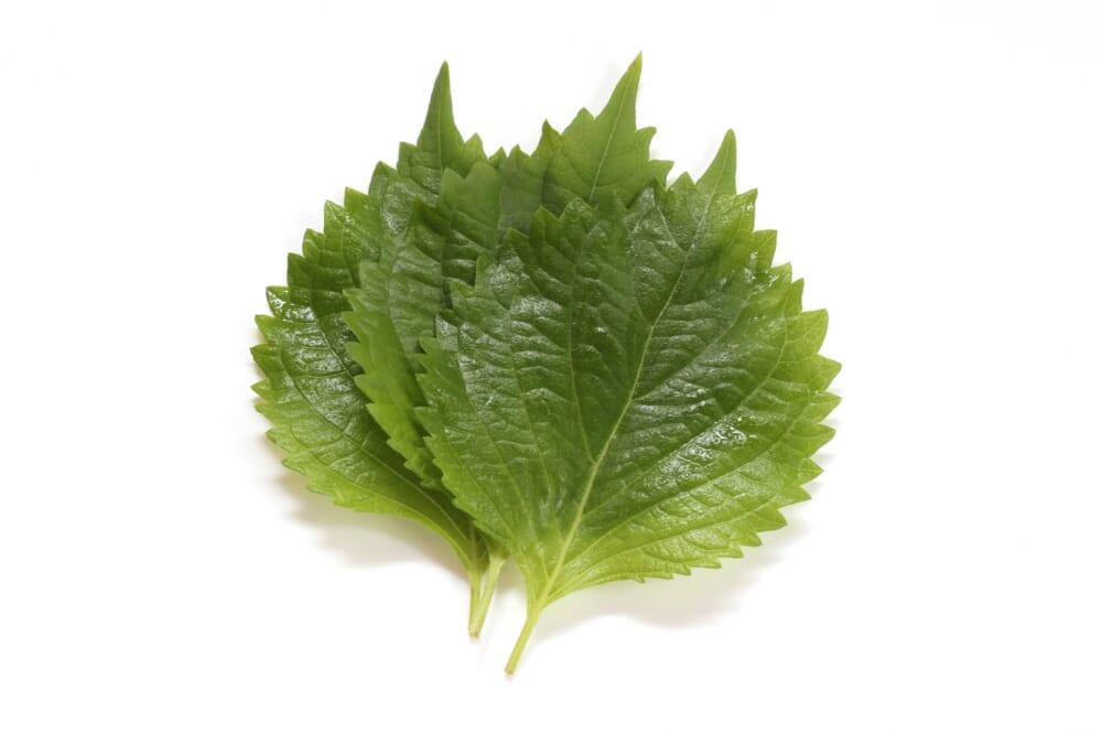 夏の暑さから身体を守る!薬味だけじゃない香味野菜活用法