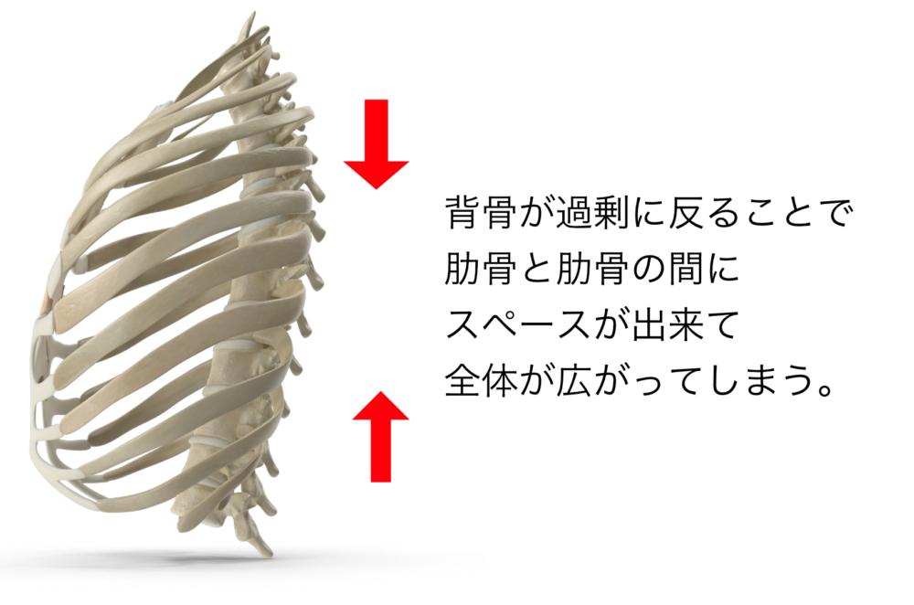 実際に、肋骨を触りながら腰を思いっきり反ってみてください。大きく広がりますよね