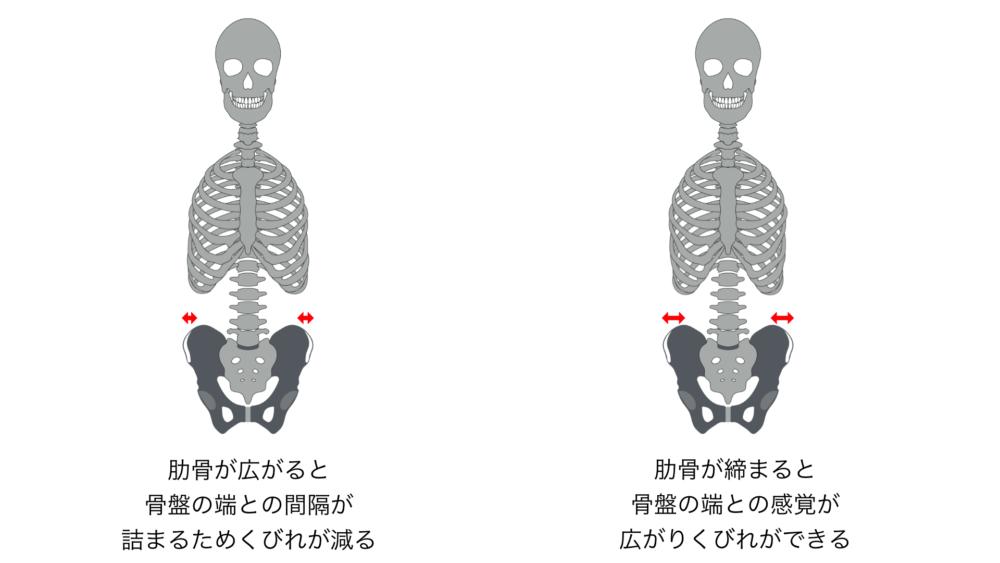 肋骨・骨盤説明